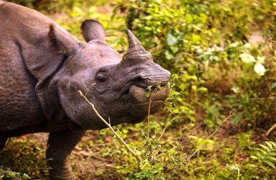 Chitwan Wildlife Photography Tour