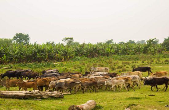 Koshi Tappu Wildlife Safari