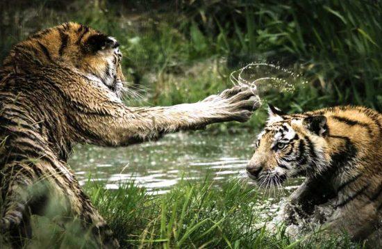Special Chitwan Jungle Safari Tour