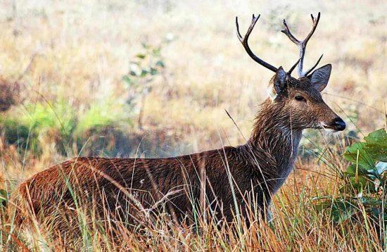 Sukhla Phanta Wildlife Safari